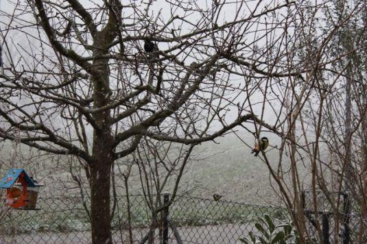 Schnee mit Vögeln