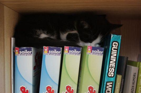 Katze in der Kiste 2
