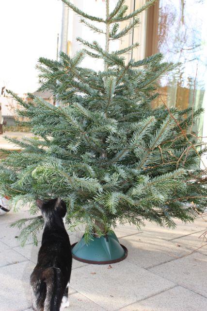 Baum mit Katze