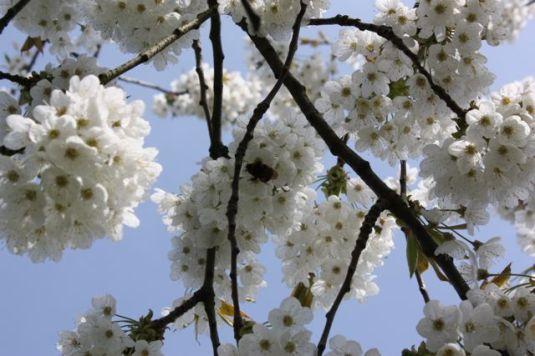 Blütenpracht 1