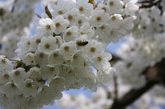 Blütenpracht 3