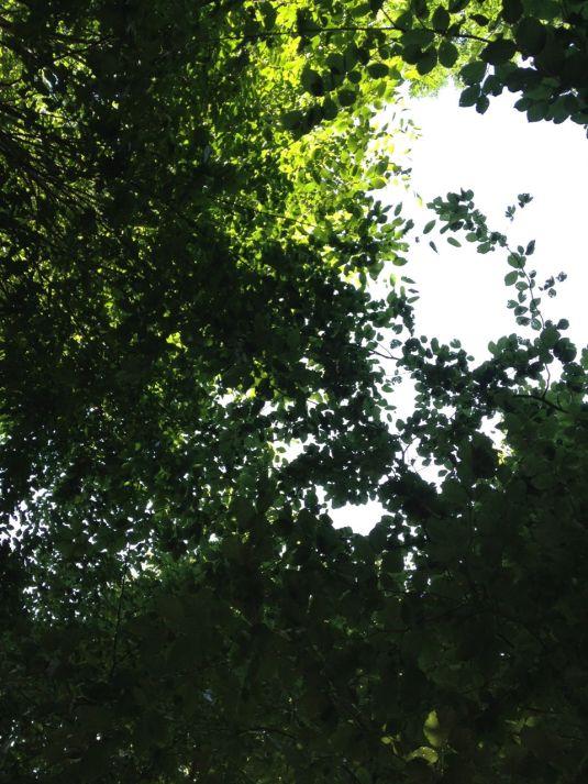 1.8. Blätterdach