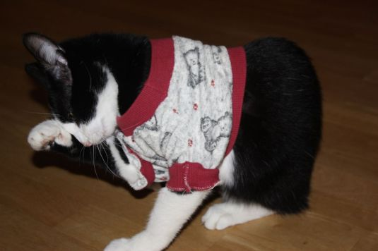 Katze mit Pulli