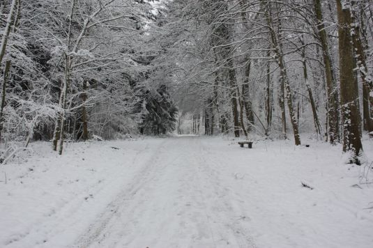 Waldweg im Winter