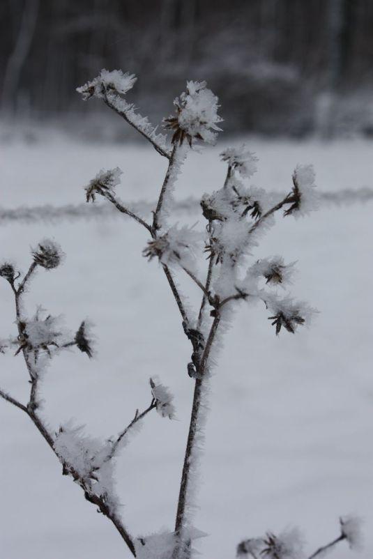 Schneegeäst