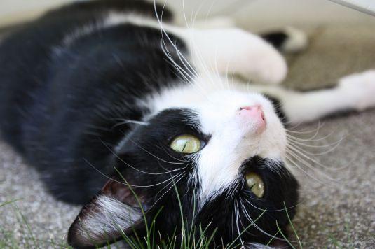 Katze chillt