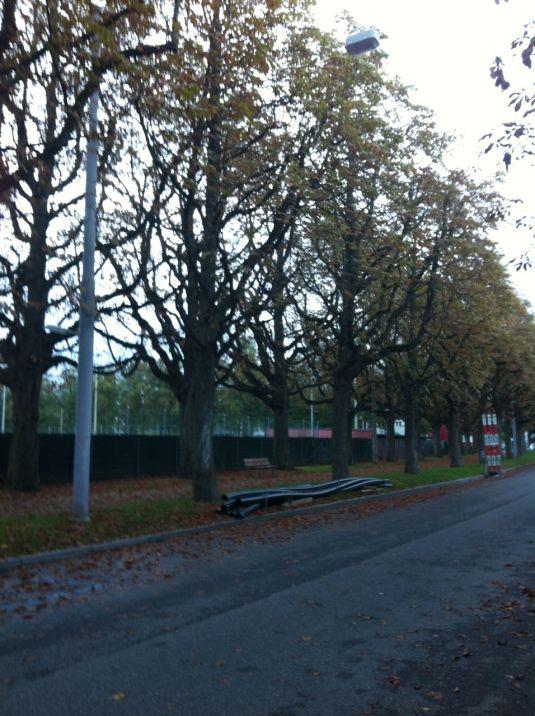 Herbstbäume