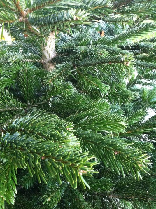 Weihnachtsbaum ungeschminkt